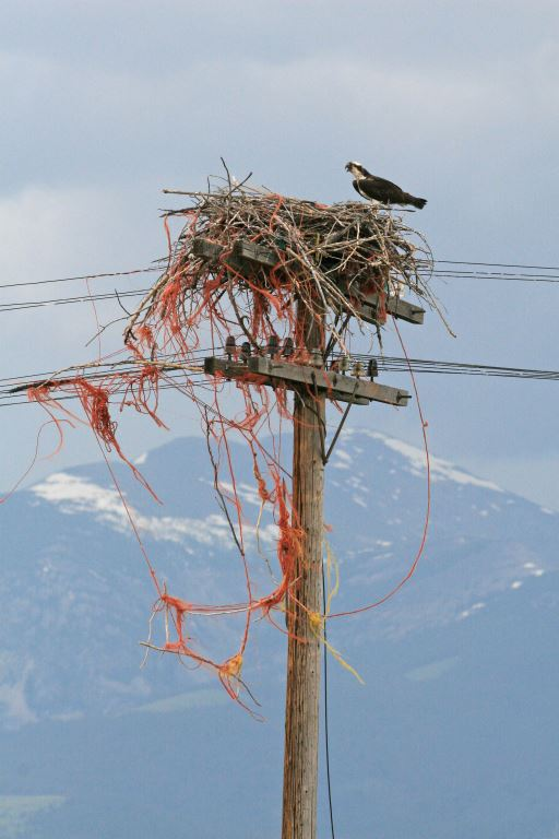 Baling twine Grant Kohr's Ranch nest